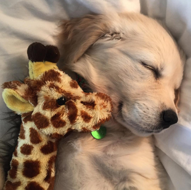 puppy and giraffe best buddies