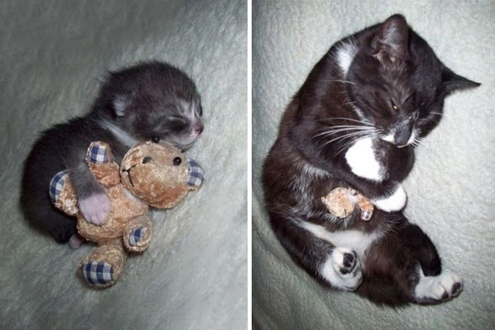 cat still sleeps with his friend