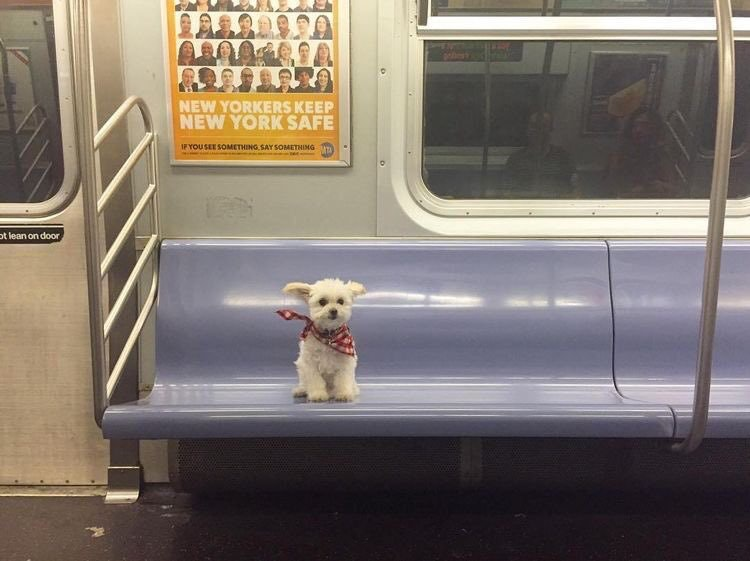 she took the midnight train going anywhere dog subway