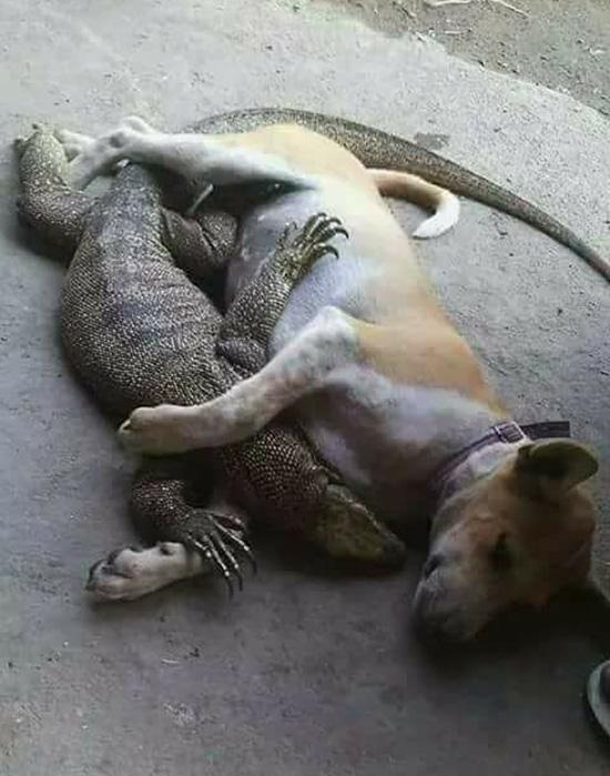 dog cuddles lizard