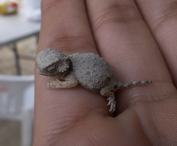 very tiny baby dragon