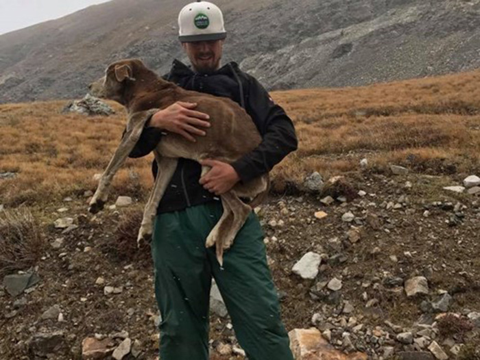 hikers rescue lost dog mountains