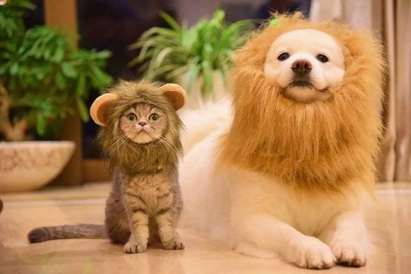 two lions cat and dog costume