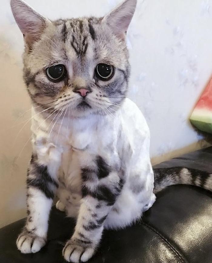 saddest cat in the world