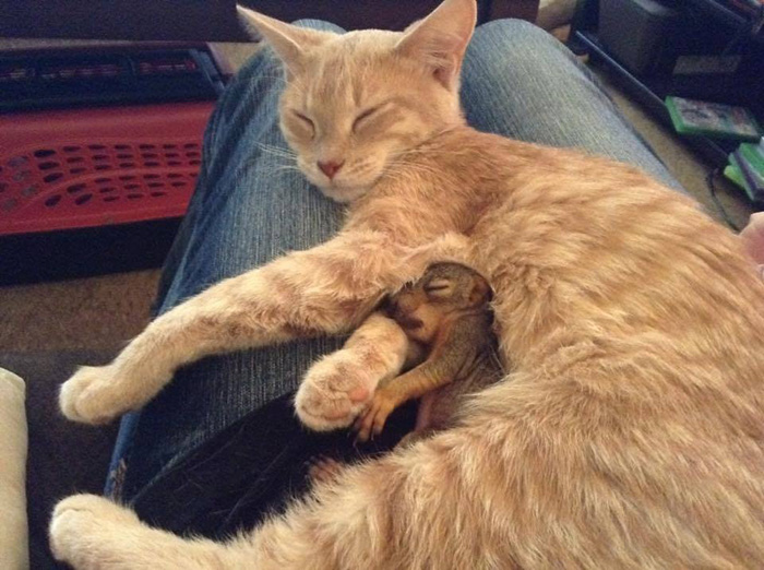 cat with rescue squirrel