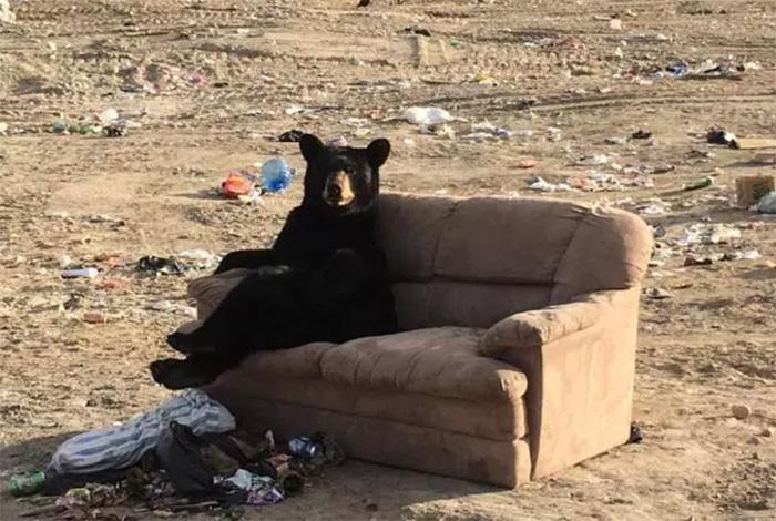 bears are big furry humans