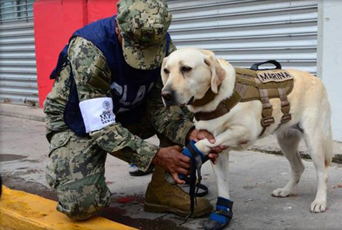 frida dog in Mexico saving people earthquake