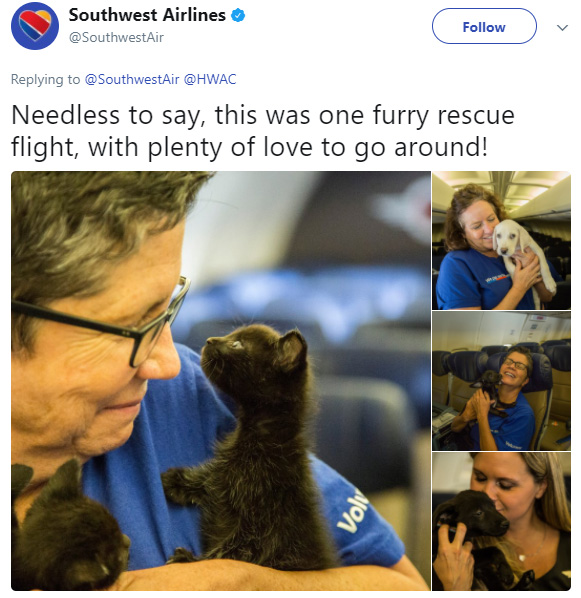 Southwest Airlines Flies Cabin Full of Shelter Animals out of Houston