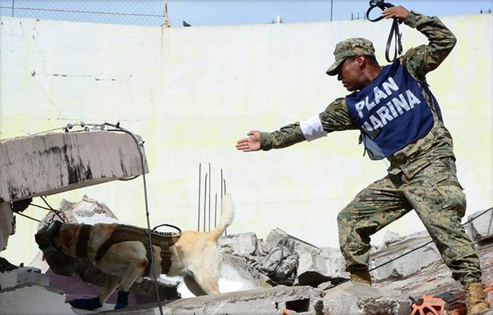frida dog in Mexico saving people earthquake
