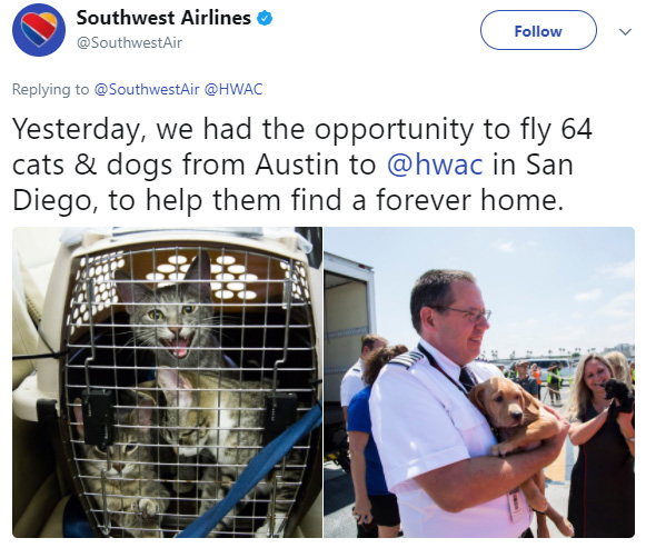 Southwest Airlines Is Flying Shelter Animals Out Of Houston