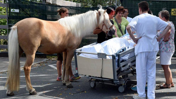 horse meets with dying owner
