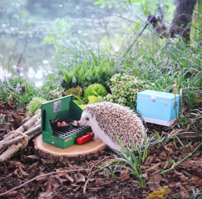This Little Hedgehog Went 39 Camping 39 And It 39 S The Cutest