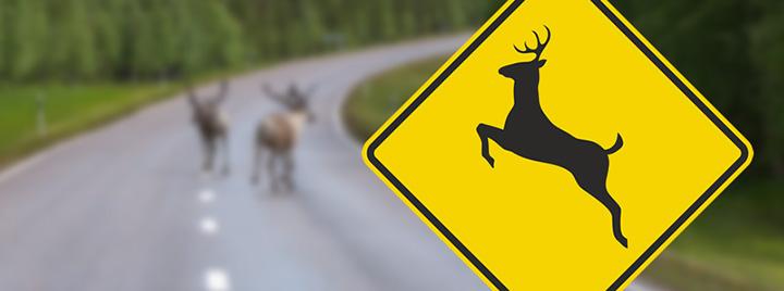 deer can not read signs
