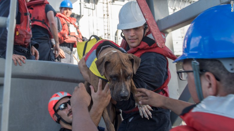navy rescues two women dogs lost at sea months