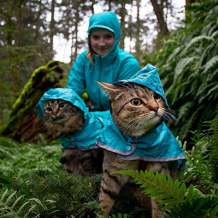 cats in raincoats