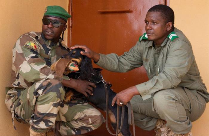 elephant brigade Mali