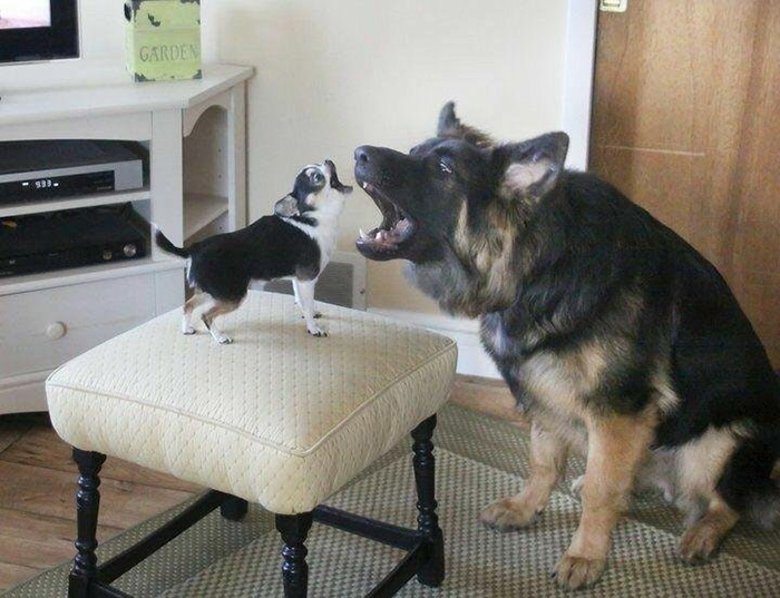 dogs record duet