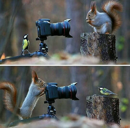 squirrel bird photo