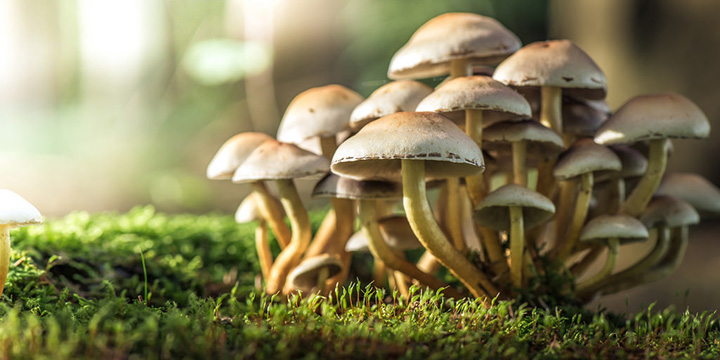 magic mushrooms cure depression