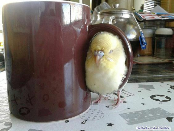 bird fits sits coffee cup