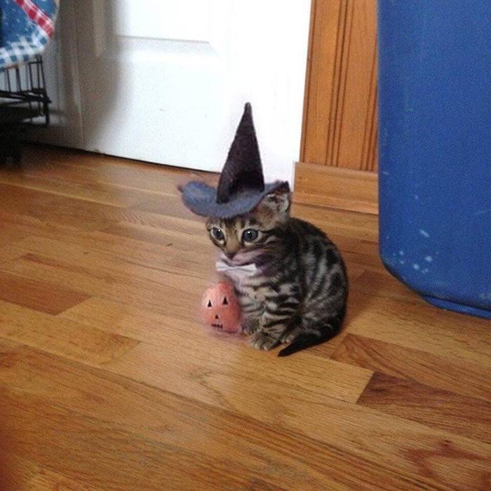 kitten ready for Halloween