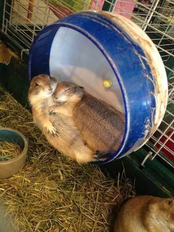 cuddling animals