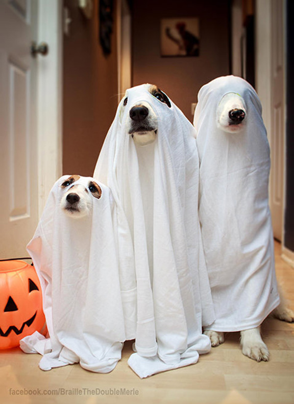 three ghost dogs one blind