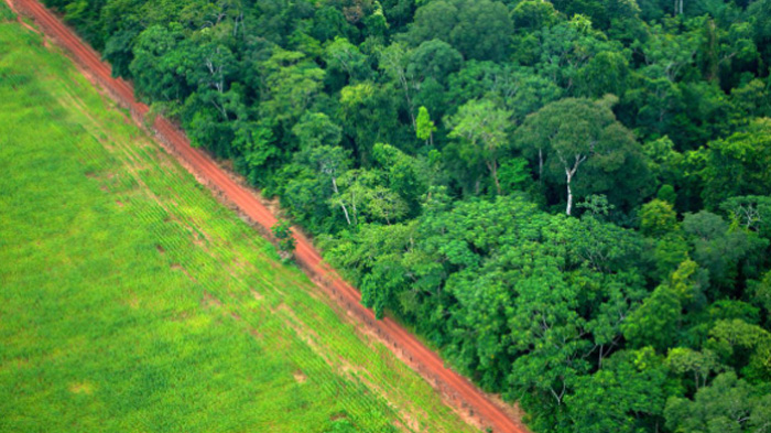 largest amazon reforestation project