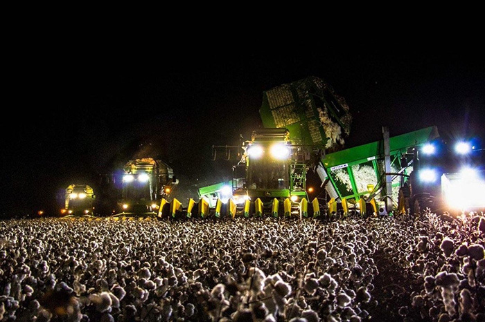 cotton picker at night looks like concert crowd