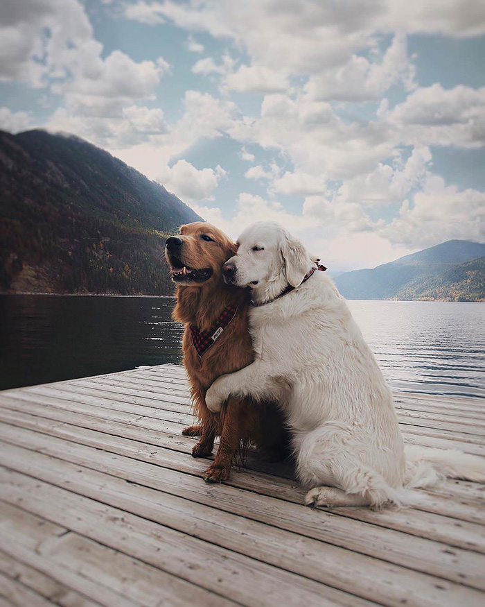 dogs posing for shot by the lake