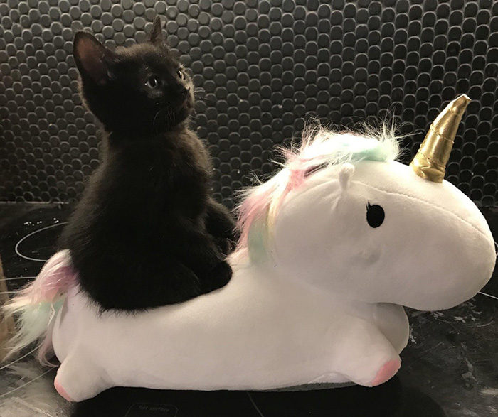 onward noble steed