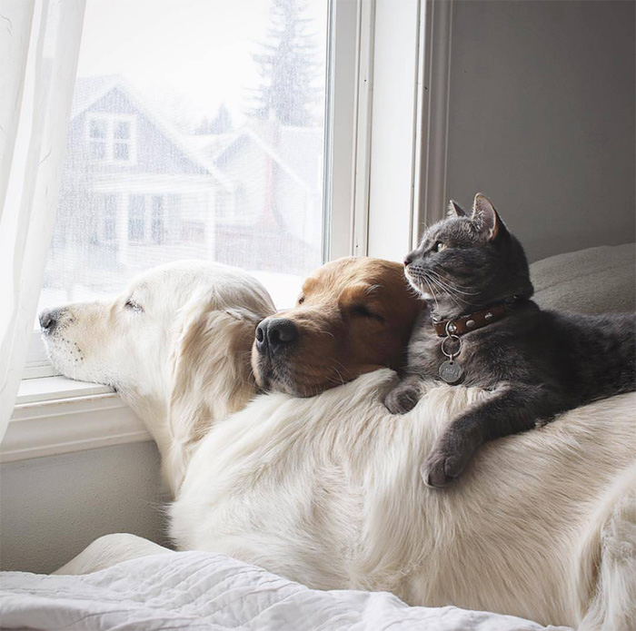 happy family dog and cats