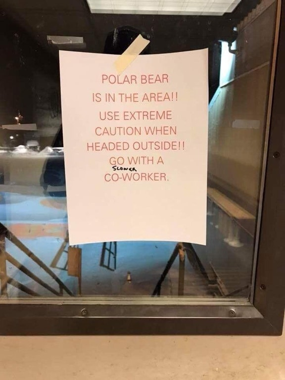 polar bears coworker slower funny sign