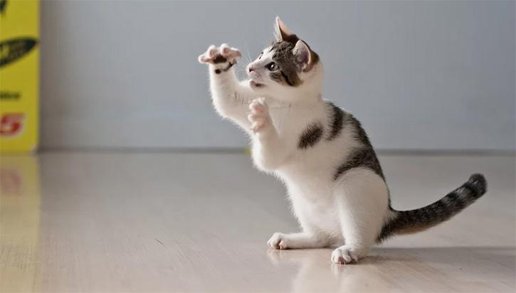 Denver bans declawing of cats