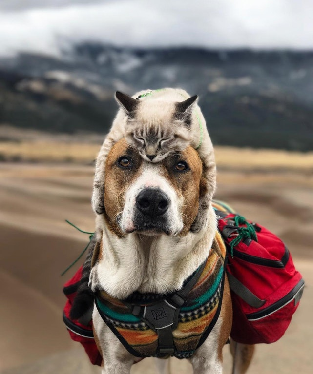 cat hat on dog
