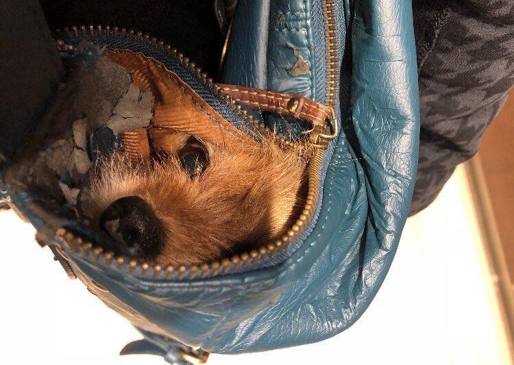 nurses sneak dog into hospital to say goodbye