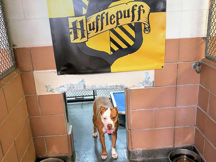 harry potter themed animal shelter