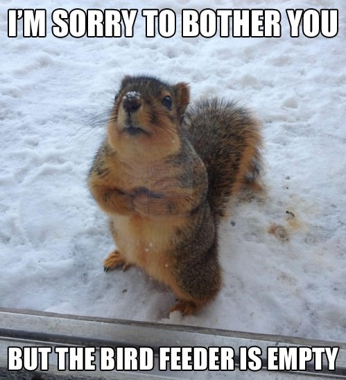 squirrel says bird feeder empty