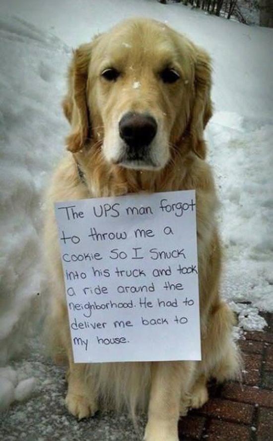 dog UPS truck funny