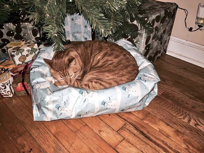 cat bed christmas
