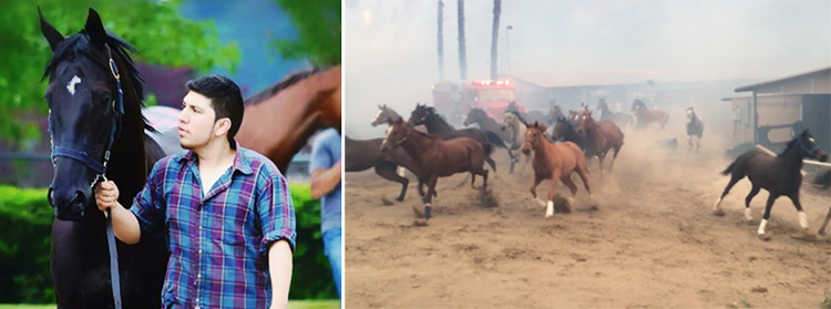 Leo Tapia saves horses from wildfires