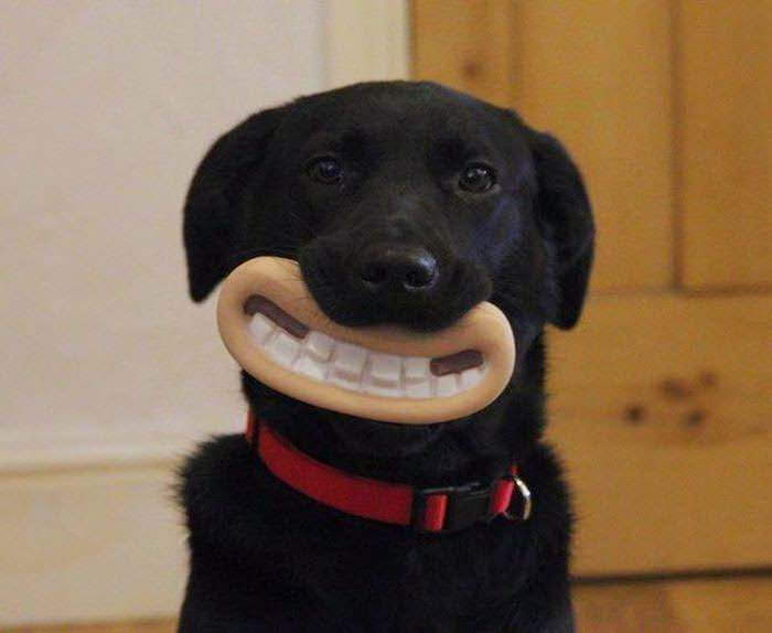 greatest chew toy ever