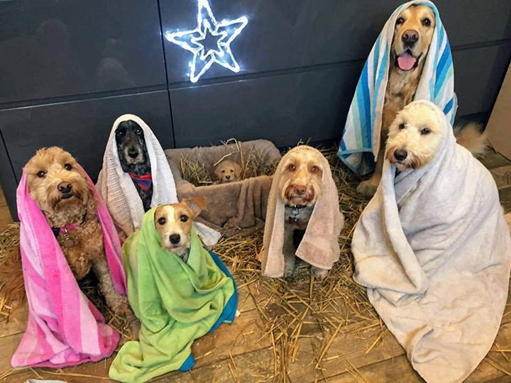 dog nativity scene