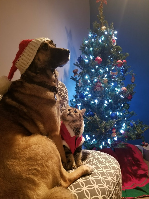 furbabies christmas photo cat and dog
