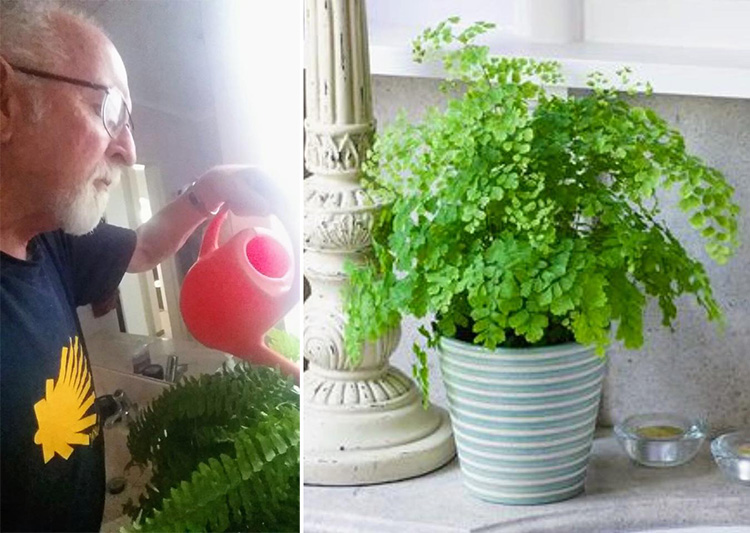 Husband Fulfills Dying Wife's Request To Water Plants, Learns They're Plastic Years Later 1x8mw-dad-waters-plastic-plants-for-years-2