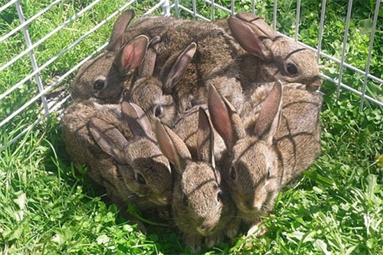 one square foot of bunny