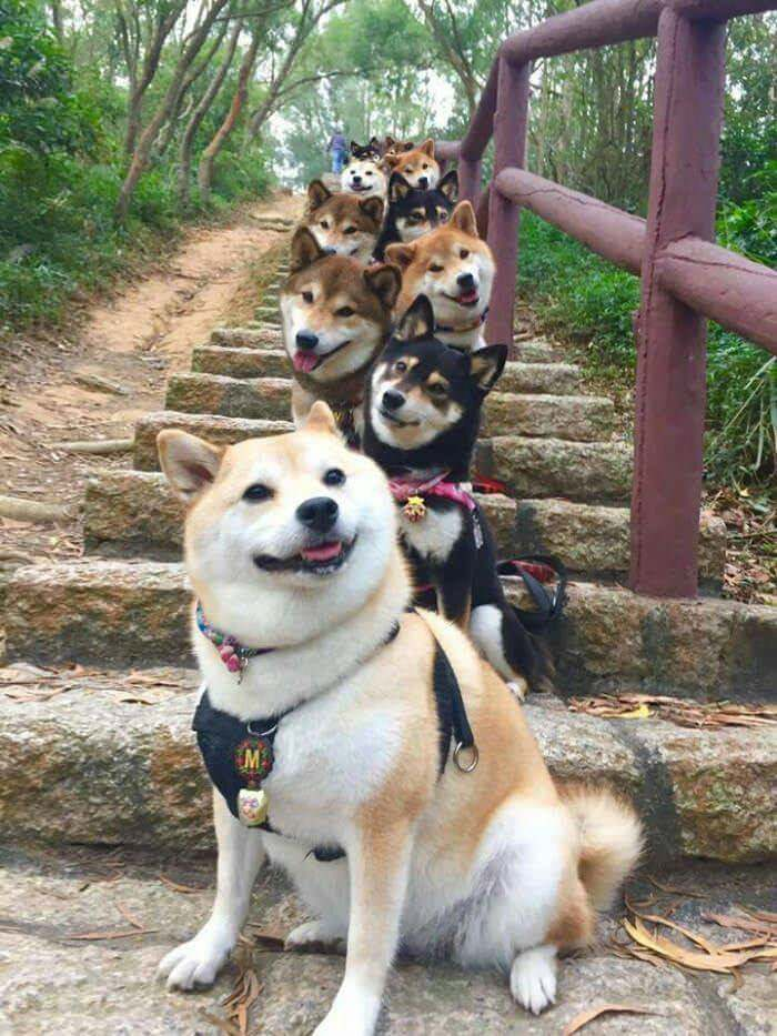 dog stairway to heaven
