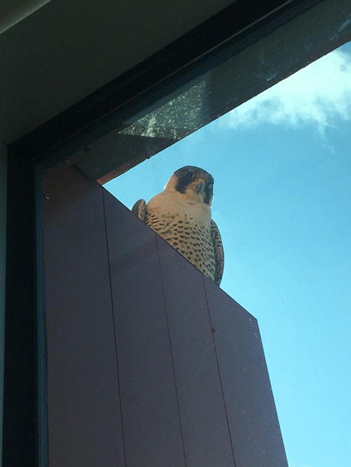 people share their office birds window visitors