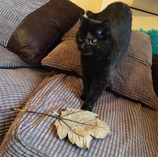 cat brings owner leaves instead of mice