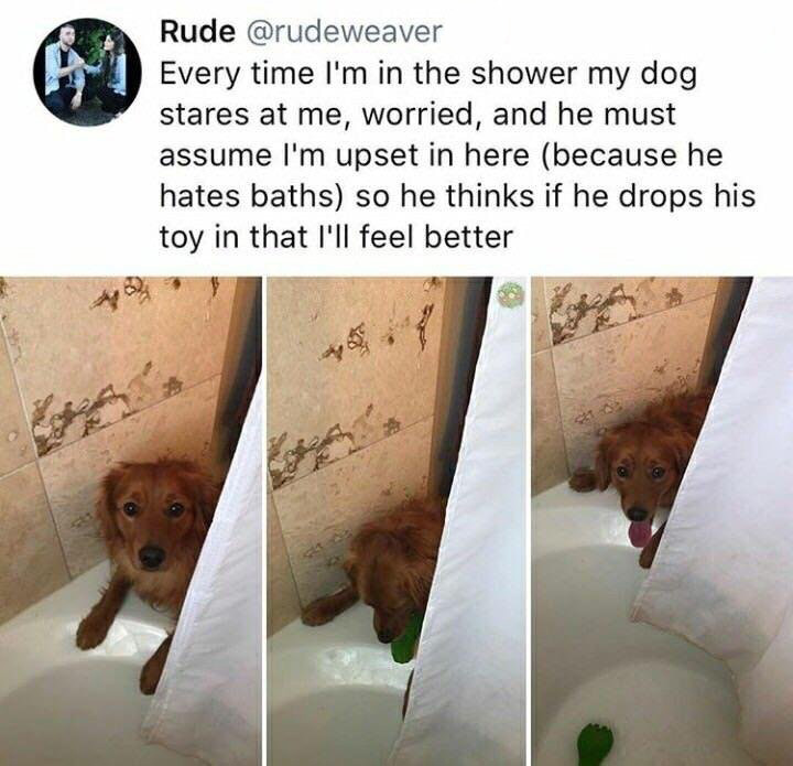 wholesome dog shower toy